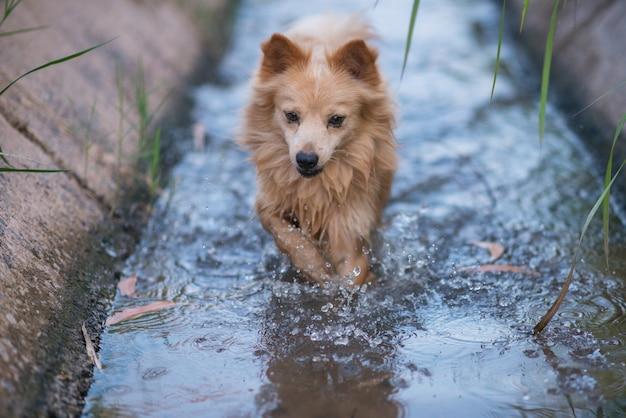 Der hund spielt wasser
