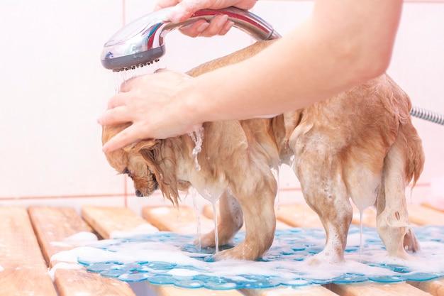 Der hund wird im haustier-salon gewaschen.