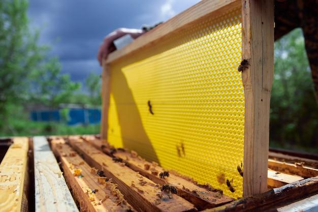 Der imker im bienenhaus überprüft die bienenstöcke und führt die reinigung durch, hebt den film unter die abdeckung des bienenstocks