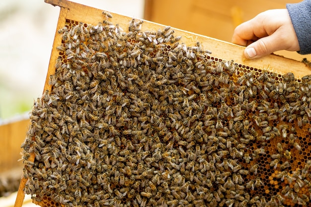 Der imker kümmert sich um waben. der imker zeigt eine leere wabe. der imker kümmert sich um bienen und waben. leere bienenwaben.