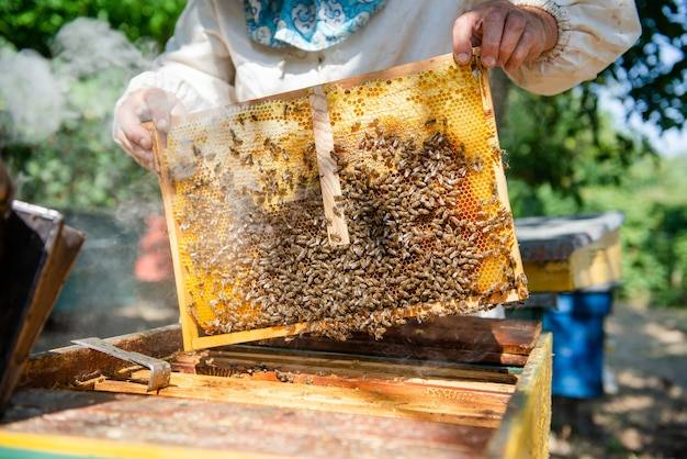 Der imker öffnet den bienenstock, die bienen kontrollieren, kontrollieren honig. imker erforscht waben.