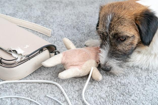 Der jack russell terrier-hund verursachte ein chaos zu hause, der allein an seinem telefonkabel gekaut wurde