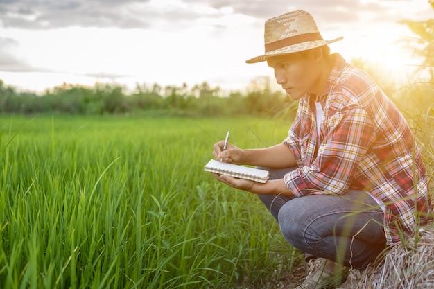 Der junge asiatische landwirt, der sein grünes reisfeld überprüft und machen einen bericht über notizbuch