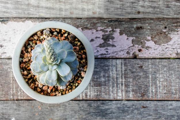 Der kaktus in einem topf auf dem holzbrett ist im vintage-stil.