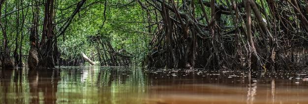 Der kleine amazonas in pang-nga in sang nae canal thailand