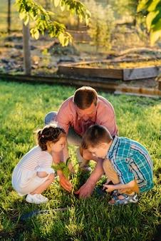 Der kleine bruder und die schwester pflanzen mit ihrem vater setzlinge in einem schönen frühlingsgarten bei sonnenuntergang. neues leben. die umwelt schützen