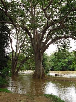 Der kleine fluss im yala-nationalpark, sri lanka
