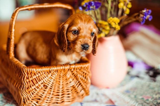 Der kleine hund, der im cubby sitzt
