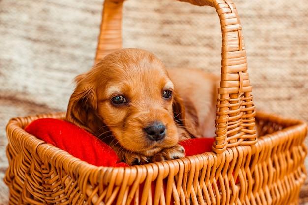 Der kleine hund liegt in der kabine