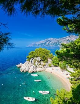 Der kleine schöne podrace strand in brela durch kiefern, makarska riviera, kroatien