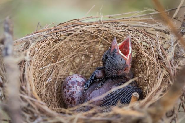 Der kleine vogel im nest schläft und wartet darauf, dass die mutter das essen betritt.