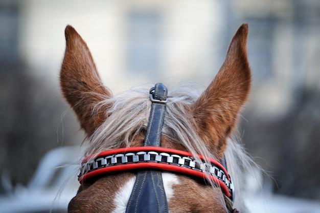 Der kopf einer pferdenahaufnahme in der wintersaison