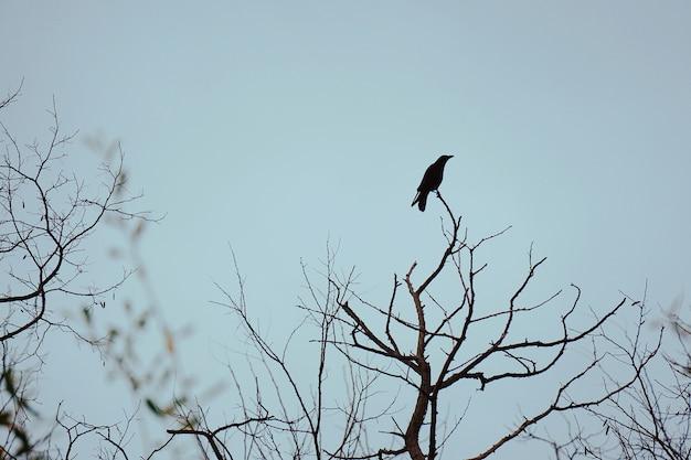 Der krähenvogel auf den ästen
