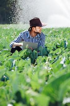 Der landwirt überprüft die ernte und nutzt die computertechnologie auf plantagen mit sprinkleranlage.
