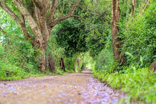 Der lange weg der straße neben großen grünen bäumen wie baumtunnel weg. tansania, ostafrika.
