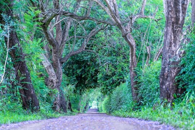 Der lange weg der straße neben großen grünen bäumen wie baumtunnel weg