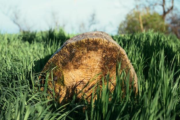 Der log in das gras im sonnenlicht
