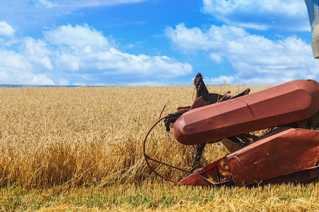 Der mähdrescher erntet reifen weizen auf dem getreidefeld. landwirtschaftliche arbeit im sommer. header hautnah.
