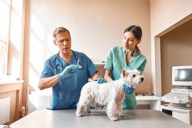 Der männliche tierarzt wird einem kleinen hund eine injektion geben, während seine assistentin eine tierklinik für patienten hält