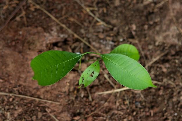 Der mangobaum wächst in der draufsicht.