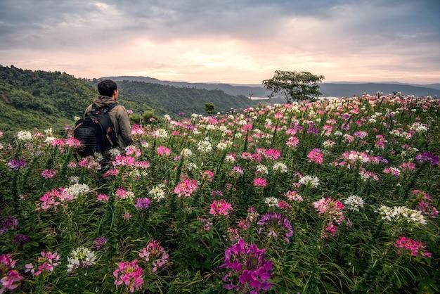 Der mann, der auf dem blumengebiet auf den bergen mit sonnenaufgang steht.