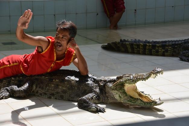 Der mann liegt auf dem krokodil. krokodilshow im zoo von phuket, thailand - dezember 2015: krokodilshow auf der krokodilfarm. diese aufregende show ist bei touristen und thailändern sehr bekannt