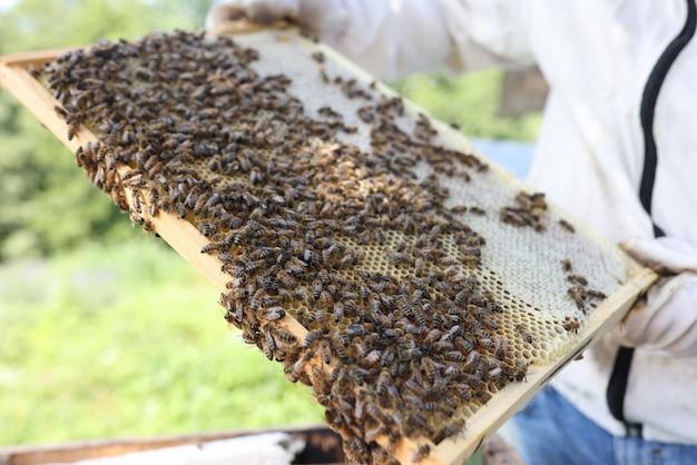 Der mensch hält viele bienen auf waben in den händen imkerei für anfängerkonzept
