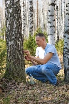 Der mensch sammelt birkensaft im frühlingswald