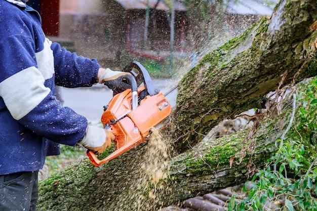 Der mensch schneidet mit einer kettensäge auf einen baum und bricht den stammbaum nach einem hurrikan