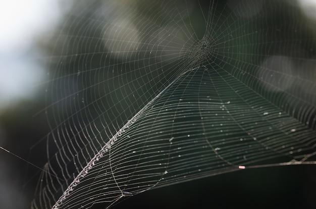 Der nahaufnahmehintergrund des spinnennetzes (spinnennetz)