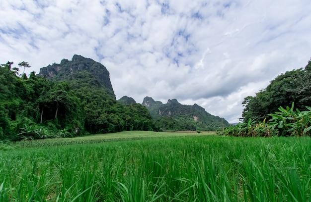 Der naturlandschaftshintergrund