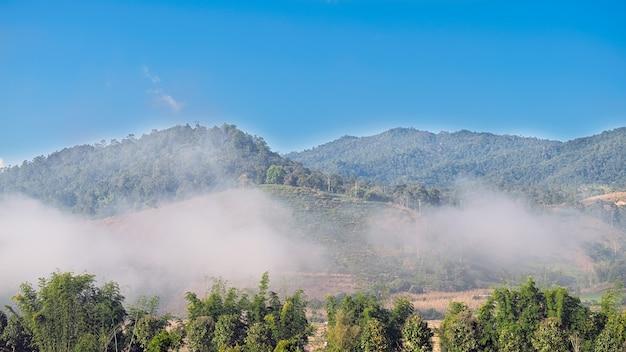Der nebelfluss über den berg am morgen.