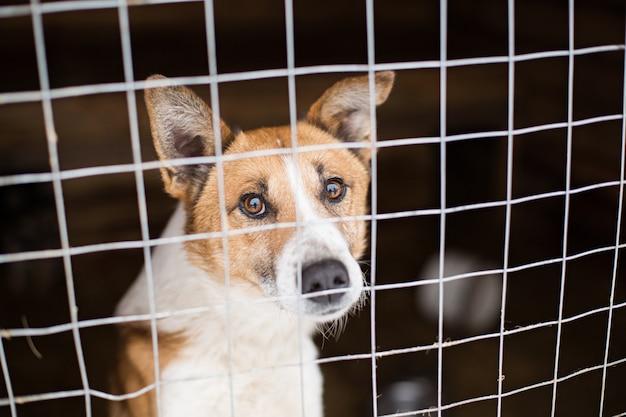 Der obdachlose hund hinter den gitterstäben sieht mit großen, traurigen augen aus