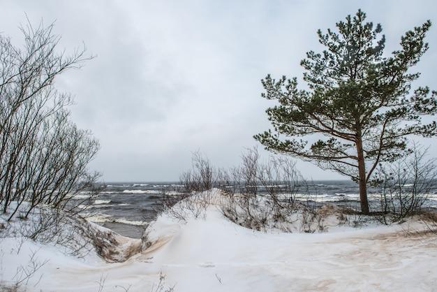 Der ostseestrand ist im winter schneebedeckt und es gibt große wellen im meer. fußweg zwischen den winterdünen der ostsee in saulkrasti in lettland