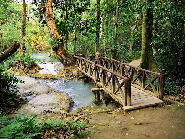 Der park im dschungel, laos