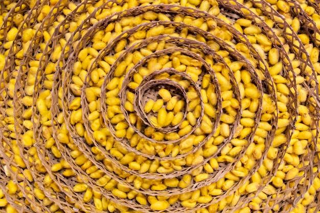 Der puppenkokon ist gelb und wird auf einen kokonblock gelegt