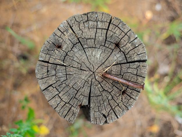 Der querschnitt des baumstammes zeigt die wachstumsringe. nagel in den strahl. textur aus holz