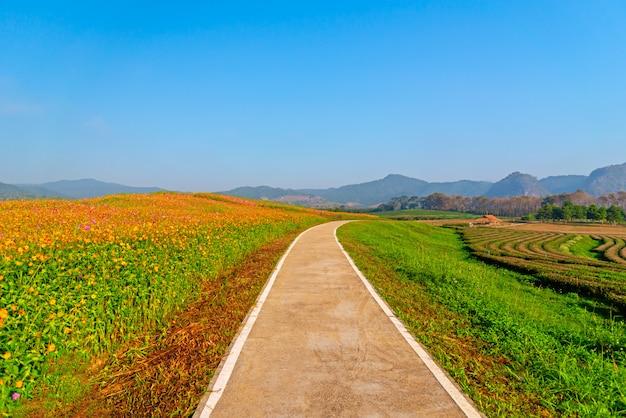 Der radweg für das morgendliche fahrradtraining mit wunderschönen gärten