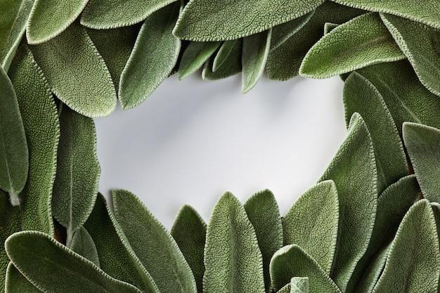 Der rahmen aus grünem frischem salbei und platz für text