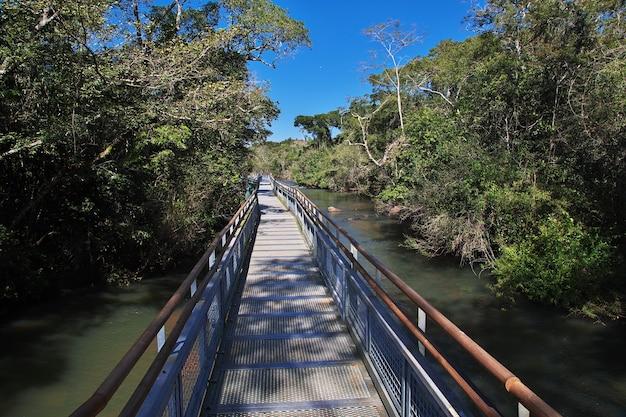Der regenwald auf iguazu fällt in argentinien und brasilien