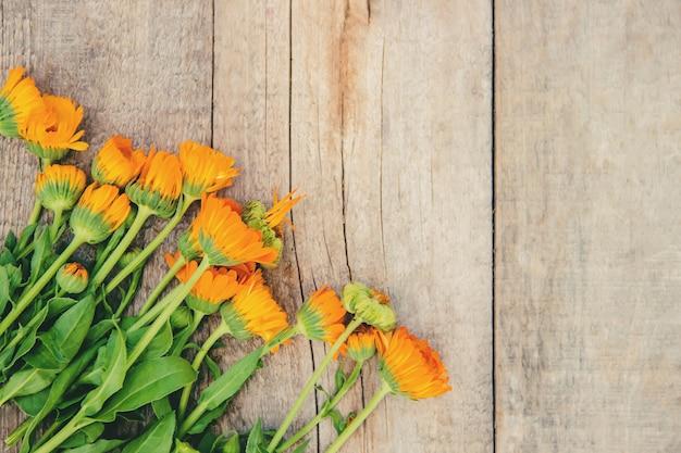 Der ringelblumenextrakt. medizinische pflanzen. selektiver fokus