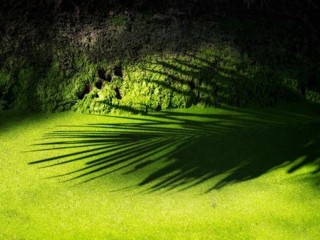 Der schatten der kokosnussblätter drapierte in das grüne wasserfloß.