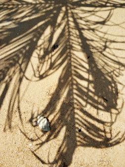 Der schatten einer palme am strand mit einer muschel.