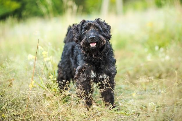 Der schwarze hund schaut in den rahmen und lächelt.