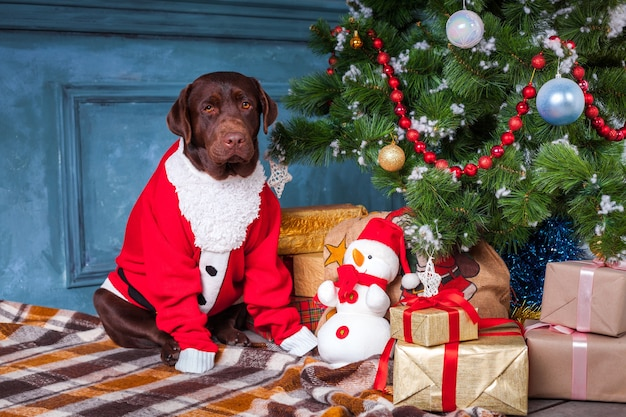 Der schwarze labrador-retriever, der mit geschenken auf weihnachtsdekorationen sitzt