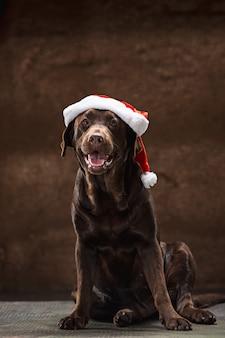 Der schwarze labrador-retriever, der mit geschenken auf weihnachtsmannmütze sitzt