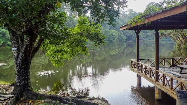 Der see im rainforest discovery center in sepilok, borneo