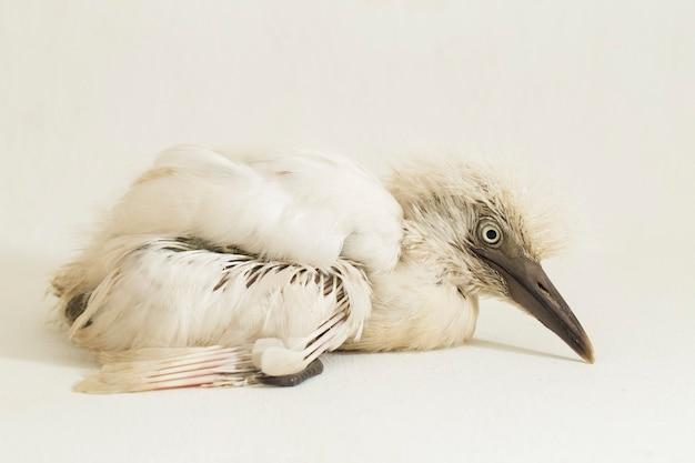 Der seidenreiher vogel egretta garzetta isoliert auf weißem hintergrund