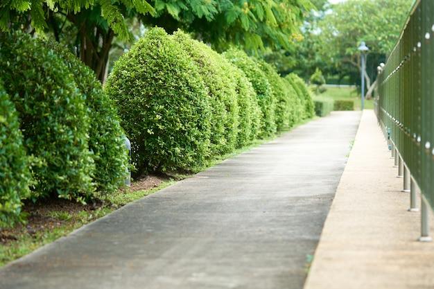 Der spaziergang und die rollbahn im park erstrecken sich mit den laufenden bäumen