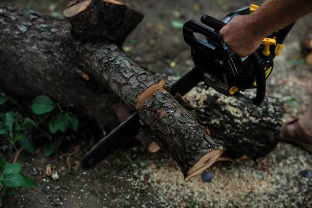Der stamm des baumes wird mit einer großen säge gesägt.